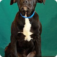 Adopt A Pet :: Cherokee - Waldorf, MD