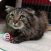Adopt A Pet :: Jasper - Winchendon, MA