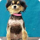 Adopt A Pet :: Nissan