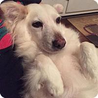 Adopt A Pet :: Gia of SC - Mooresville, NC