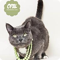 Adopt A Pet :: Opal - Wyandotte, MI