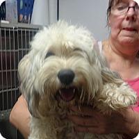 Adopt A Pet :: Fern - baltimore, MD