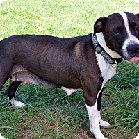 Adopt A Pet :: Madeline - Avon, OH