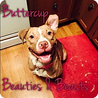 Adopt A Pet :: Buttercup - Wichita, KS