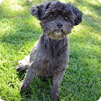 Adopt A Pet :: Zinnia - Mountain Center, CA