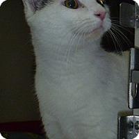 Adopt A Pet :: Julie - Hamburg, NY