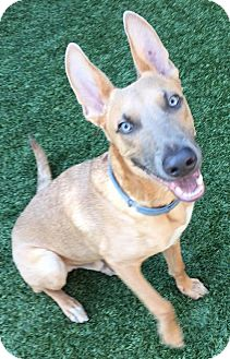 German Shepherd Dog Dog for adoption in Los Angeles, California - Luther