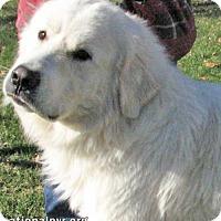 Adopt A Pet :: Harley - adopted - Beacon, NY