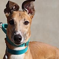 Adopt A Pet :: Grady - Ashland City, TN
