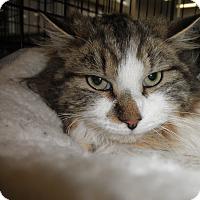 Adopt A Pet :: Fuzzy Too Z - Highland Park, NJ
