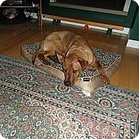 Adopt A Pet :: Rukus - Douglas, ON
