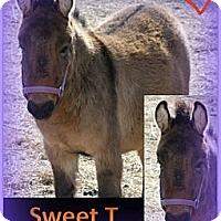 Adopt A Pet :: Sweet T - Malvern, IA
