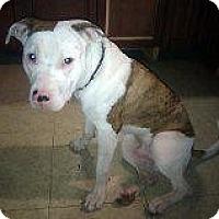 Adopt A Pet :: Sparky - Montreal, QC