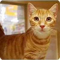 Adopt A Pet :: Snickerdoodle - Modesto, CA