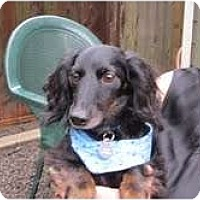 Adopt A Pet :: BLACK JACK - Portland, OR