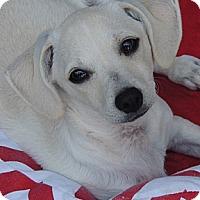 Adopt A Pet :: Jo - La Habra Heights, CA
