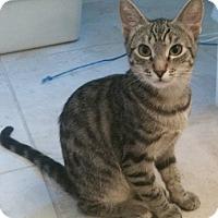 Adopt A Pet :: Castle - North Highlands, CA