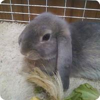 Adopt A Pet :: Morton - Williston, FL
