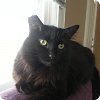 Adopt A Pet :: zz 'Inca' courtesy post - Cincinnati, OH