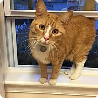 Adopt A Pet :: Rajah - Horsham, PA