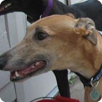 Adopt A Pet :: Sweet Tooth - Lexington, SC
