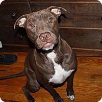 Adopt A Pet :: Koda - Chicago, IL