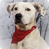 Adopt A Pet :: CHANCE~pending - Sterling, MA