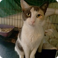 Adopt A Pet :: Autumn - Broomall, PA