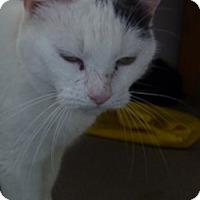 Adopt A Pet :: Kendra - Hamburg, NY