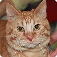 Adopt A Pet :: Francium - Colorado Springs, CO