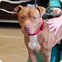Adopt A Pet :: Rudy - Chatham, VA