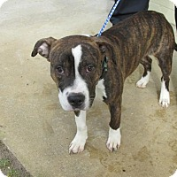 Adopt A Pet :: Ely - Rocky Mount, NC