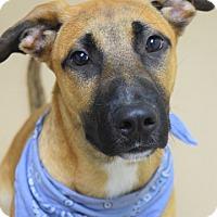 Adopt A Pet :: River - Dublin, CA