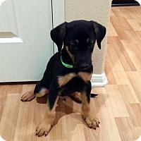 Adopt A Pet :: Dodge - Irvine, CA