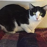 Adopt A Pet :: Klondike - Bourbonnais, IL