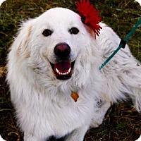 Adopt A Pet :: Amaya - Salt Lake City, UT