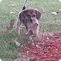 Adopt A Pet :: Knickers and Kingston - Richmond, MI