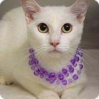 Adopt A Pet :: Duchess - Dublin, CA