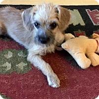 Adopt A Pet :: Leon - Scottsdale, AZ