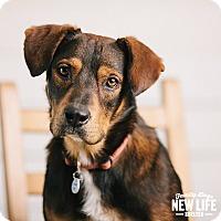 Adopt A Pet :: Ninja - Portland, OR