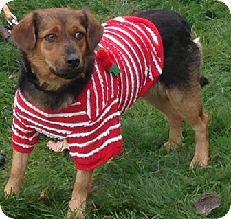 Labrador Retriever Mix Dog for adoption in Zanesville, Ohio - 45790 Ginger