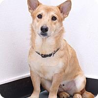 Adopt A Pet :: Taupy - Sudbury, MA