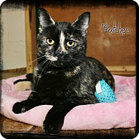 Adopt A Pet :: Patches - Shippenville, PA