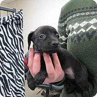 Adopt A Pet :: Winter - Murphysboro, IL