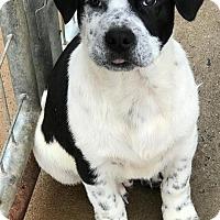 Adopt A Pet :: Willie - Irmo, SC
