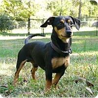 Adopt A Pet :: Alexander - Mocksville, NC