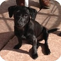 Adopt A Pet :: N's Nicki - Las Vegas, NV