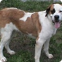 Adopt A Pet :: Franny - Dandridge, TN