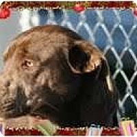 Adopt A Pet :: Roscoe - Staunton, VA