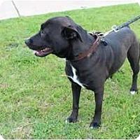 Adopt A Pet :: Abby - Justin, TX